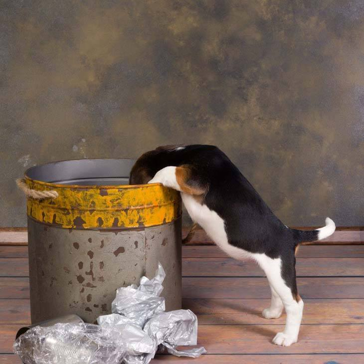 beagle puppy digging in the trash can