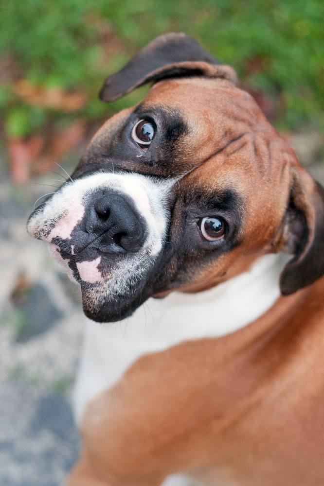 this boxer did something wrong