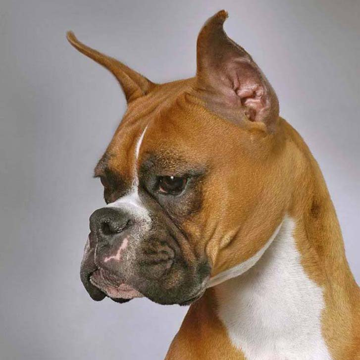 handsome boxer poses for pic