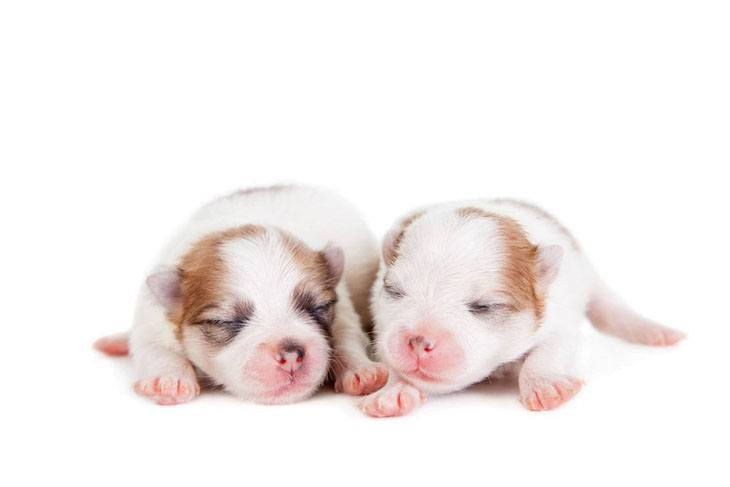 two cute napping puppies