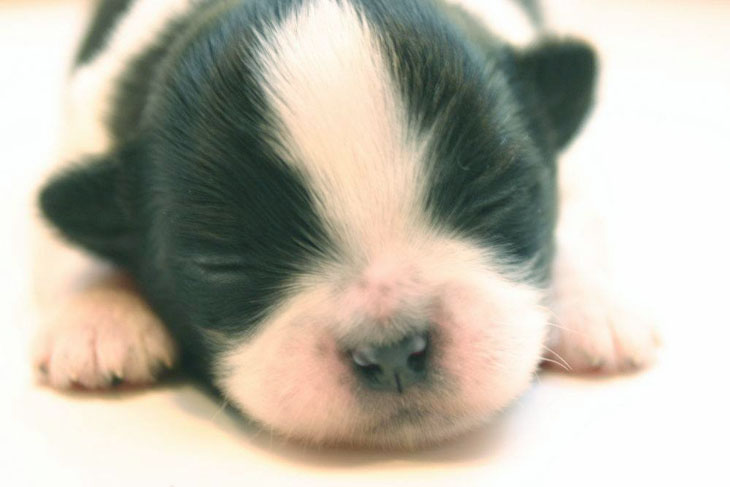 adorable newborn puppy getting hungry