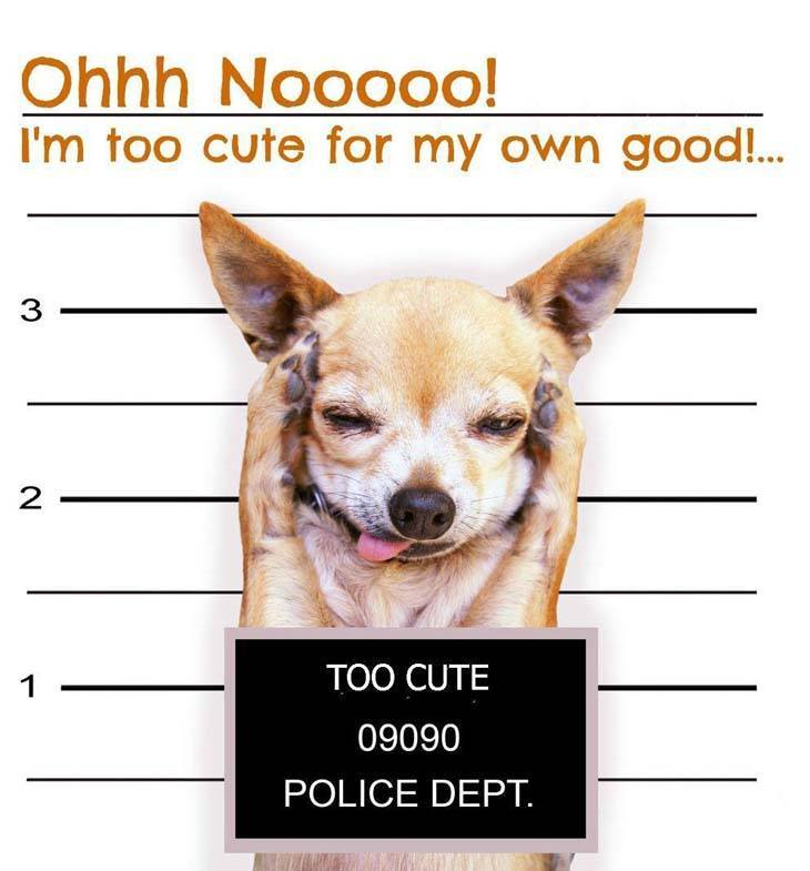 dog busted for being too cute