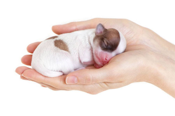 sleeping newborn puppy being held