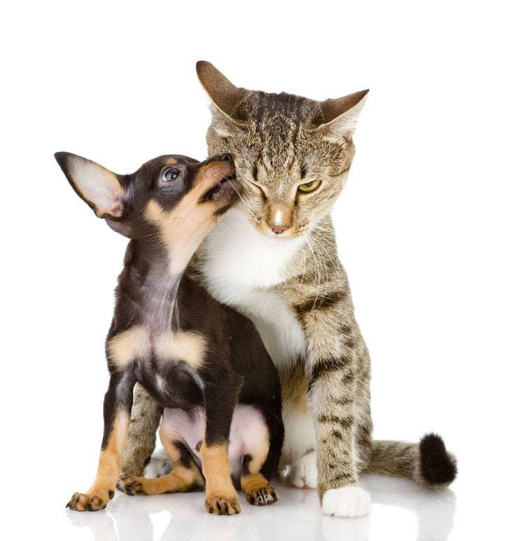 cute dog and cat kissing