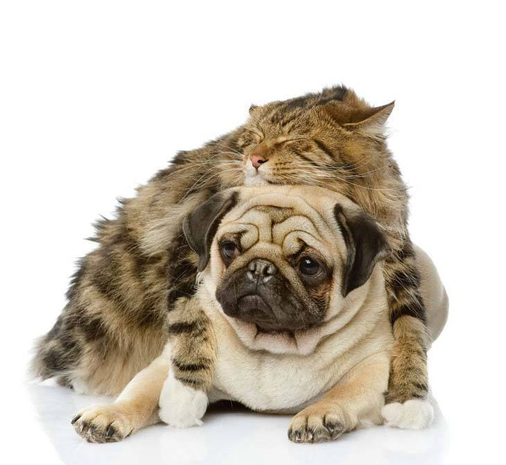 cat taking a catnap on top of dog