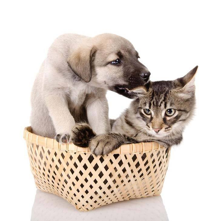 puppy kissing a reluctant cat