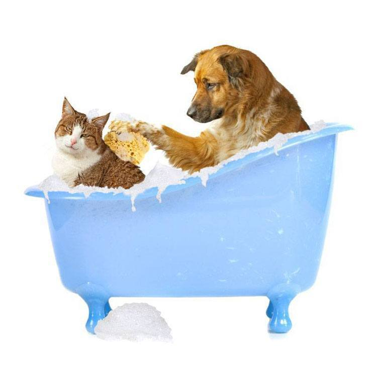 dog with cat taking a bath