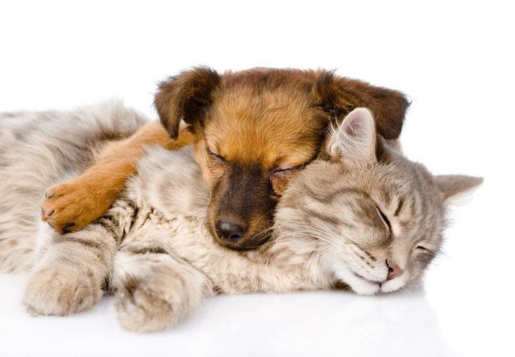 dog and cat buddies taking a nap