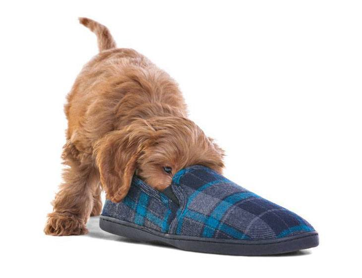 puppy investigating a slipper