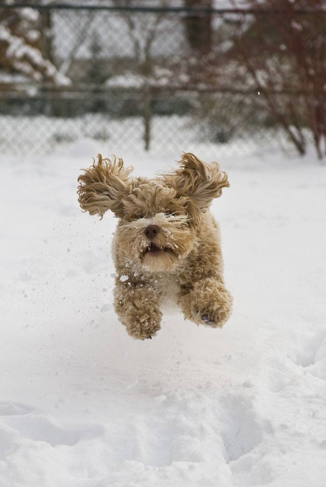 puppy jumping over the cold snow