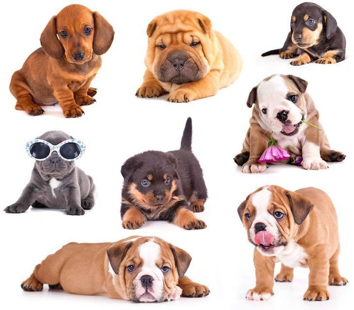 puppy picture collage