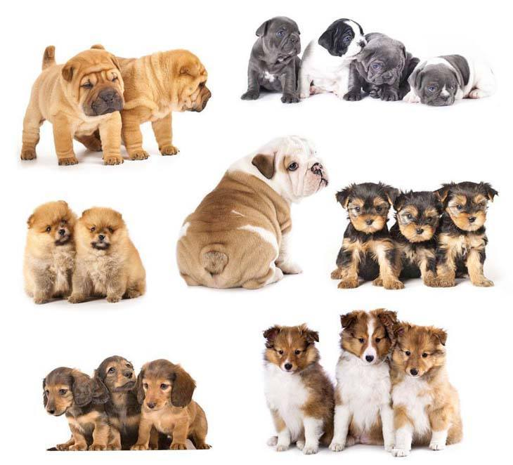 montage of cute puppies