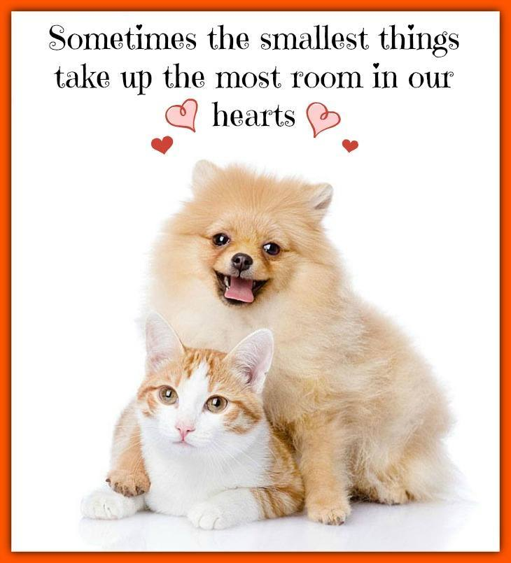 Sometimes the smallest things take up the most room in our hearts  Click on this image to see more adorable dog and cat pictures